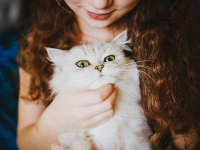 Katzen sind die beliebtesten Haustiere.