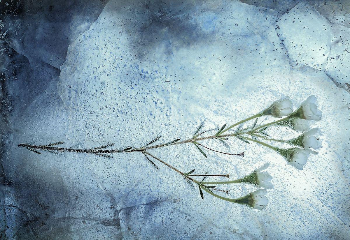 Im Eis vor Zerfall geschützt. Die Kryonisten erhoffen sich dadurch eine zweite Chance, ein zweites Leben. Foto: Zoltan Tasi