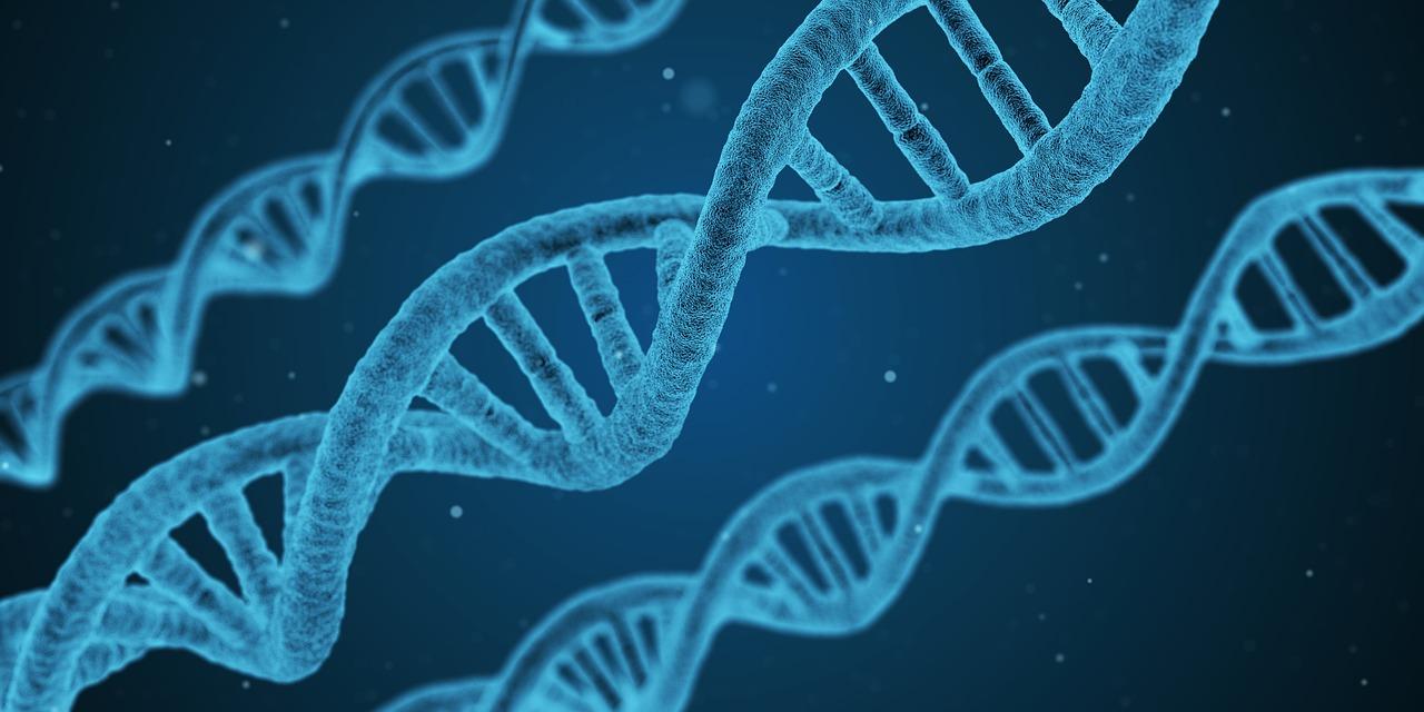 DNA Genforschung